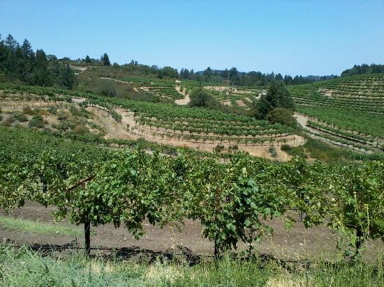 Schweiger Vineyards: Driving into Schweiger.