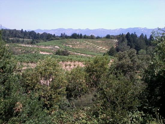 Schweiger Vineyards: View from entrance.