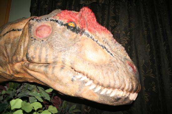 Larne Museum & Arts Centre: The head of Big Al, from the BBC's Walking With Dinosaurs