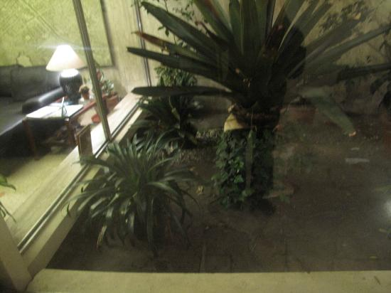 Hostel Casa Del Parque: the garden between the reception and lounge