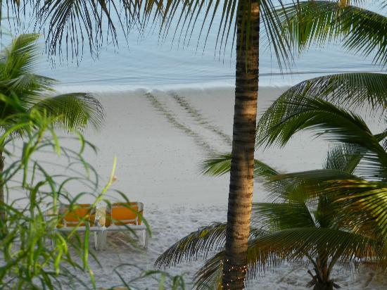Coco Reef Tobago: tutle tracks on the beach