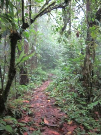 Arenal Observatory Lodge & Spa: Hiking on hotel grounds