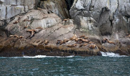 Alaska Saltwater Lodge Small Group Whale Watching, Wildlife & Glacier Tour: Around Kenai Fjords National Park and Seward