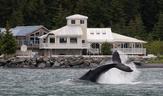 写真Alaska Saltwater Lodge Small Group Whale Watching, Wildlife & Glacier Tour枚