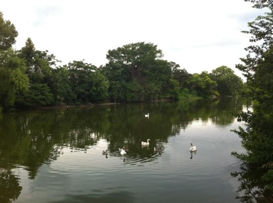 Boerne Visitor Center: feed the ducks on Boerne's Guadalupe River