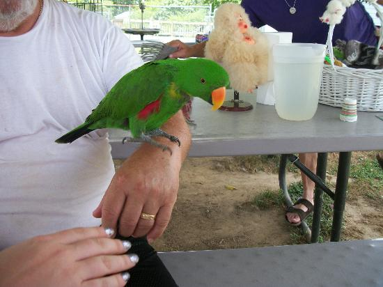 Infinity Acres Petting Ranch: Parrot.