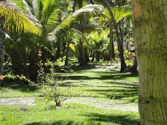 Bora Bora Pearl Beach Resort & Spa : .