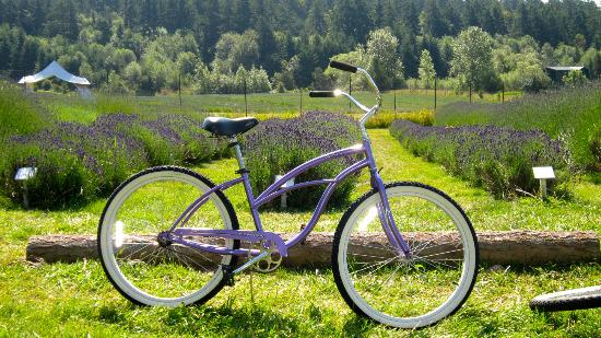 Earthbox Inn & Spa : Beach Bike at Lavender Farm