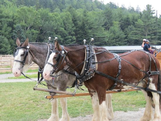 Carriages of Acadia: Homer and Bea