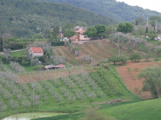 Villa Poggiano: Nearby Villa and farm/vineyard