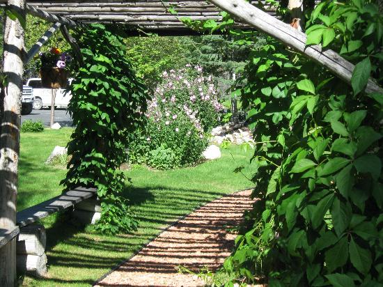McLaren Lodge Bed & Breakfast: The trellis green with hops vines