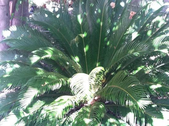 B&B Albergo Lamanna: giardini