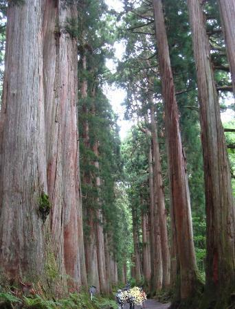 Togakushi Shrine Okusha: 杉並木が感動するほど美しい!!