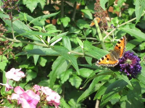 Restaurant & Hotel Wismar: It was so nice in the Garden