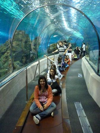 décor aquarium sous marin