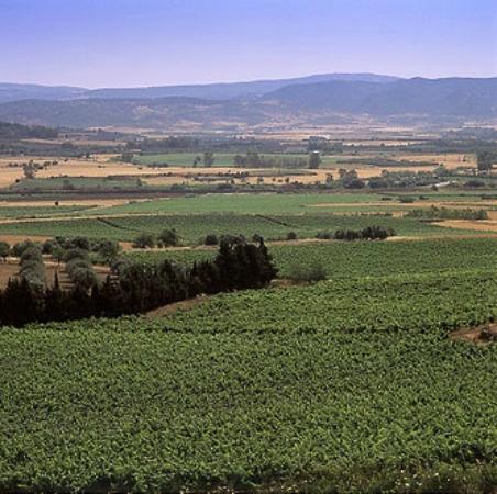 Cantine Pala : le vigne di Pala