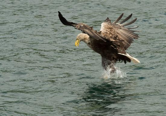 Isle of Mull, UK: typical action shot