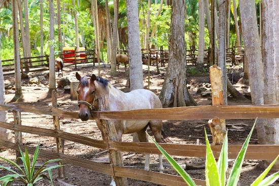Imanta Resort: There are horses on the property