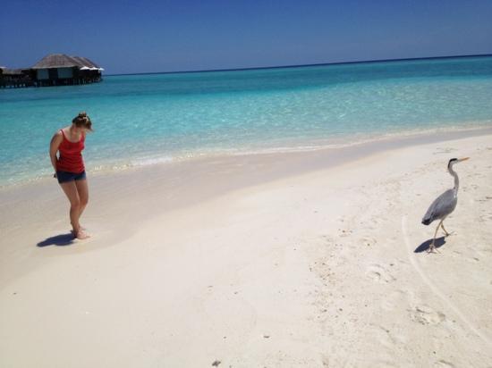 Velassaru Maldives : первый день отдыха