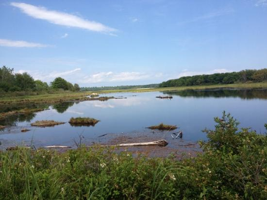 Wells Reserve at Laudholm: nice view along trails