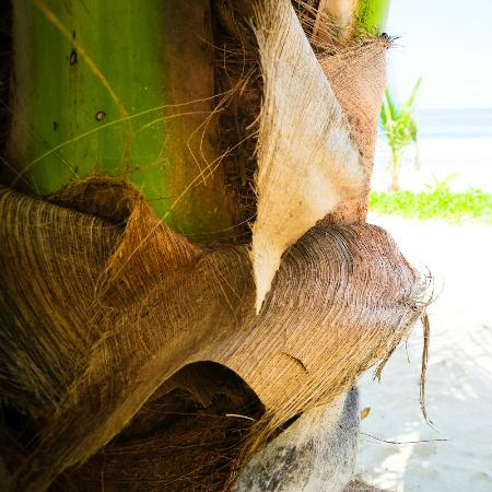 Imanta Resort: A close up of a palm tree. This raw luxe stuff is what Imanta is all about.