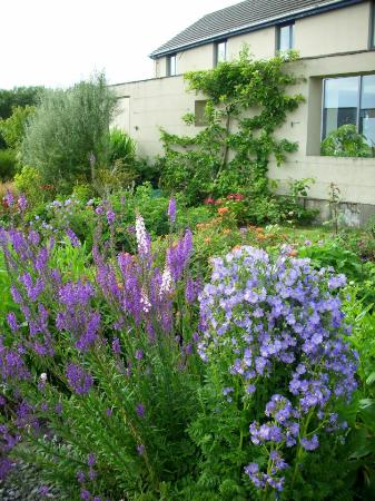 Doolin Garden and Nursery: Colours
