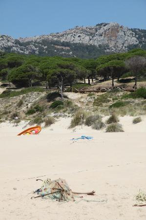 Playa de Bolonia: Ärboles!