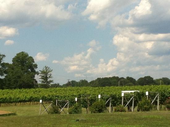 Working Dog Winery: vineyard