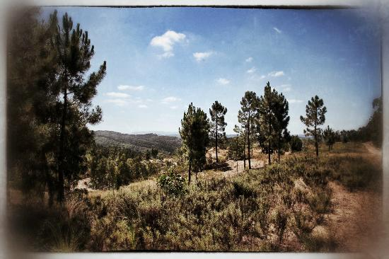 Monte da Choca: hill view