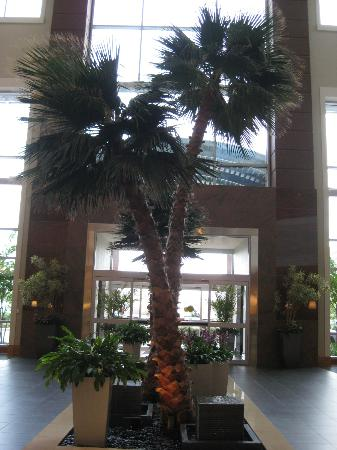 Embassy Suites by Hilton Houston - Energy Corridor: Lobby