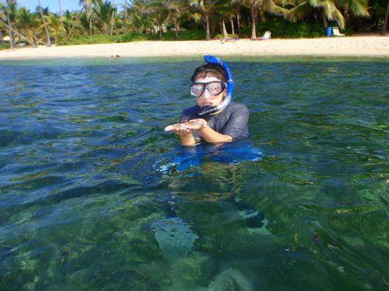 The Palms at Pelican Cove: snorkeling near the restaurant