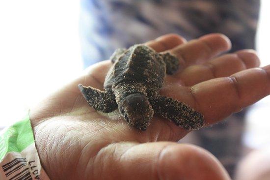 Ryanna Sun: bebe tortue de l elebage