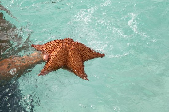 Ryanna Sun: une rare etoile de mer