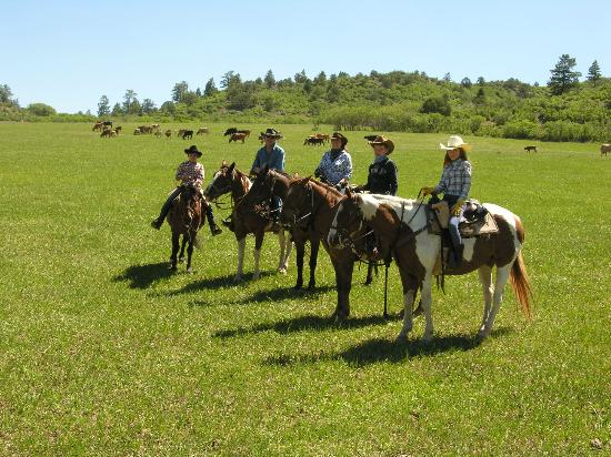 Colorado Trails Ranch: Longhorn cattle roundup wonderful