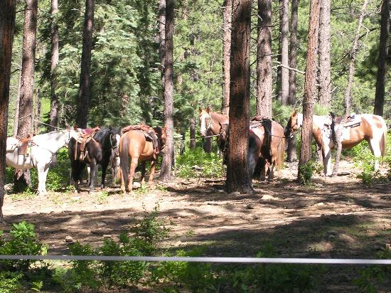 Colorado Trails Ranch: Cookout in the woods