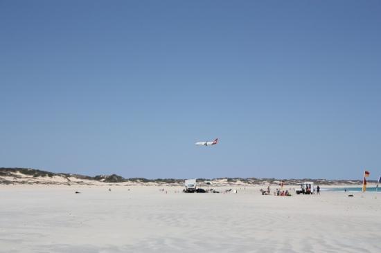 Cable Beach: De nationale vogel