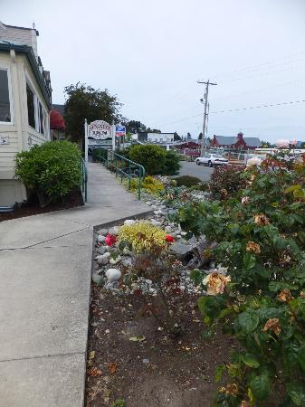 Sunrise Inn Villas And Suites: Some of the Roses