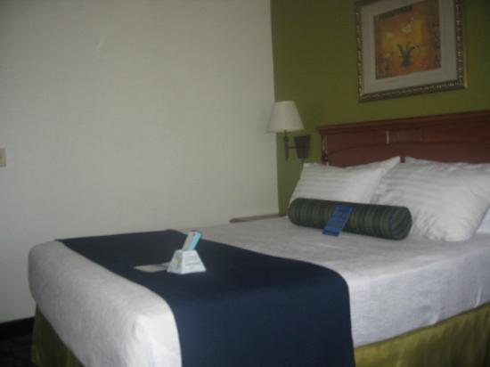 Best Western Antelope Inn & Suites: Queen Bed