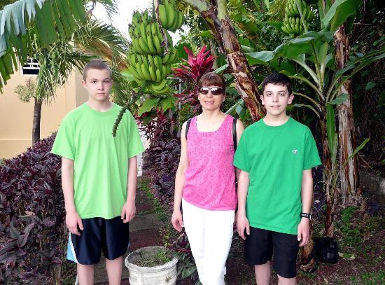 The Flamboyant Hotel & Villas: Banana Tree - Back of Hotel