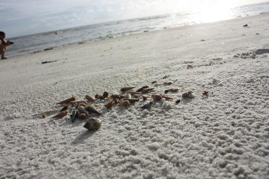 Gulfview Manor Resort: hermit crabs