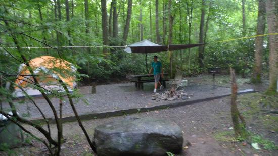 Roan Mountain, TN: Tent site #23