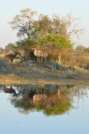 Great Plains Conservation Selinda Camp: All sorts of wildlife