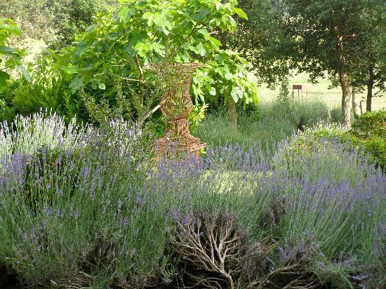 La Malcontenta Hotel: Lavender Garden
