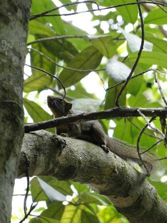 The Kebun: Heel veel eekhoorns