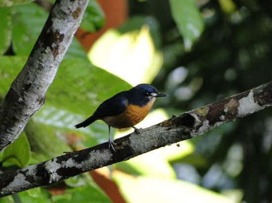 The Kebun: Mooie tropische vogels
