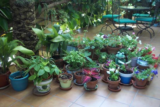 Hostal Valencia: terrasse fleurie pour le petit-déjeuner