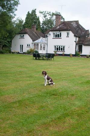 Woodacre B & B: Fantastic dog friendly garden.