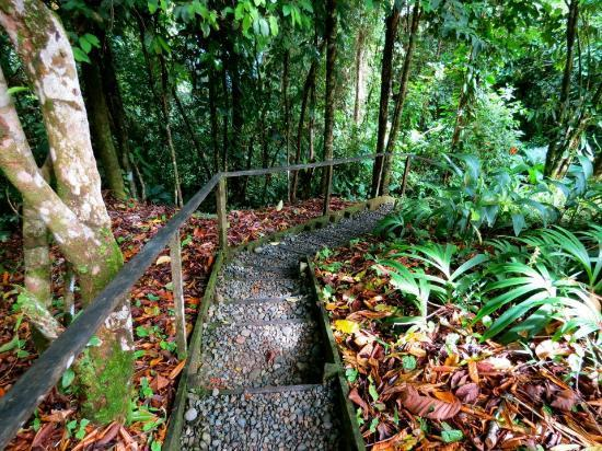 La Loma Jungle Lodge and Chocolate Farm: The steep steps up to our casita