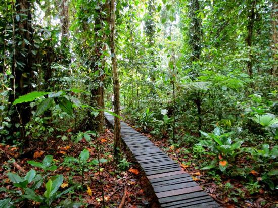 La Loma Jungle Lodge and Chocolate Farm: The pathway to the water from La Loma Lodge