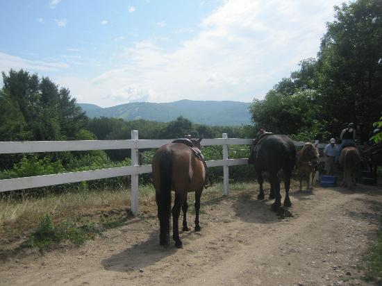 Farm by the River Bed and Breakfast with Stables: Getting ready for a trail ride